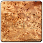Linden Tree Burl