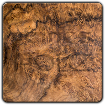 Walnut Burl
