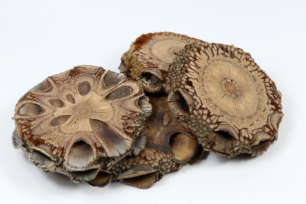 Banksia Grandis slice - Feines Holz