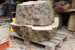 Box elder maple, saturated burl - from the sawmill
